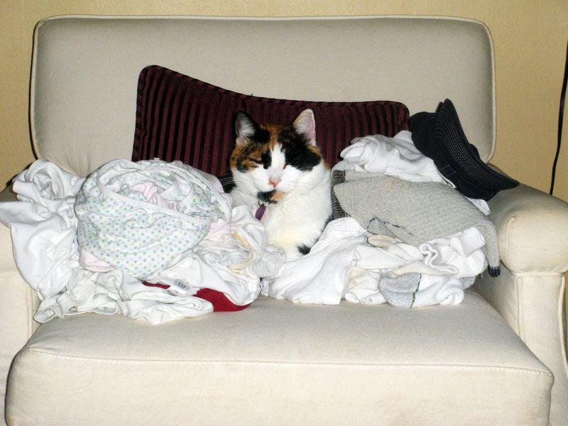 LaundryCat